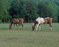 Troutman_grazing_horses_small